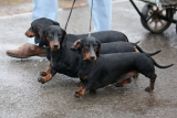 Dogs And Owners Gather For 2013 Crufts Dog Show 37107