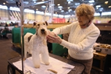 Dogs And Owners Gather For 2013 Crufts Dog Show 37115