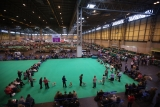 Dogs And Owners Gather For 2013 Crufts Dog Show 37134