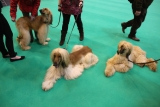 Dogs And Owners Gather For 2013 Crufts Dog Show 37153