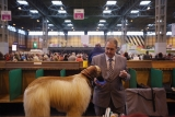 Dogs And Owners Gather For 2013 Crufts Dog Show 37176