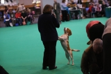 Dogs And Owners Gather For 2013 Crufts Dog Show 37196