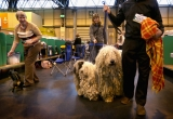Dogs And Owners Gather For 2013 Crufts Dog Show 37267