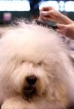 Dogs And Owners Gather For 2013 Crufts Dog Show 37279
