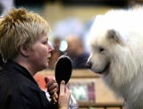 Dogs And Owners Gather For 2013 Crufts Dog Show 37302