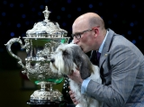 Best In Show Announced At Crufts 40806