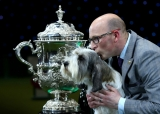 Best In Show Announced At Crufts 40815