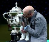 Best In Show Announced At Crufts 40822