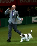 Best In Show Announced At Crufts 40828