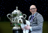 Best In Show Announced At Crufts 40829