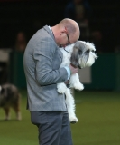 Best In Show Announced At Crufts 40850