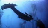 Animal Planet won't let this mermaid thing die, airs 'new evidence' 44242