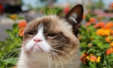 Grumpy Cat went from strength to strength 44307