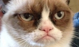 Grumpy Cat being groomed to star in her own movie 44309
