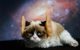 Grumpy Cat Impersonates Other Celebs 44311