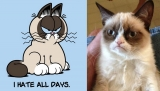 Grumpy Cat Signs Movie Deal, Will Be the Next Garfield 44312