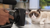 What Fans Want From Grumpy Cat, the Movie 44324