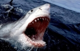 5 Ways To Make Shark Week Watchable 45717