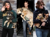 National Dog Day: See Selena Gomez, Ryan Gosling and More Stars Who Adopted Pups 46315