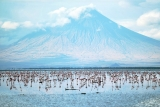 Lake Natron: Northern Tanzania Lake Turns Birds to Stone 47023