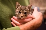 Uber celebrates National Cat Day by delivering kittens to your office 47682