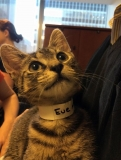 Uber app delivers kittens around NYC offices — but claws are out with cat shortage 47684