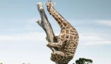 Giraffe Riddle Answer: Creator Of Facebook Question Reveals Answer, Promises More Riddles 47723