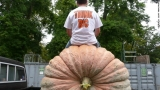 What it takes to grow a massive prize-winning pumpkin 47791