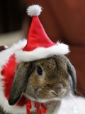 pet is wearing Santa Claus 48703