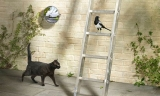Twelve superstitions for Friday the 13th 48850